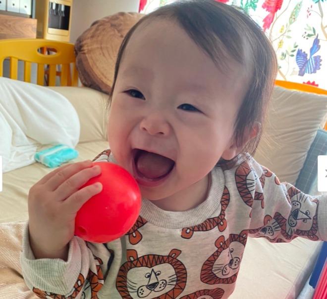 赤いボールを食べようとしているキンタローの子供