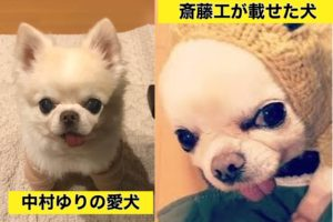 中村ゆりと斎藤工の犬が似てる